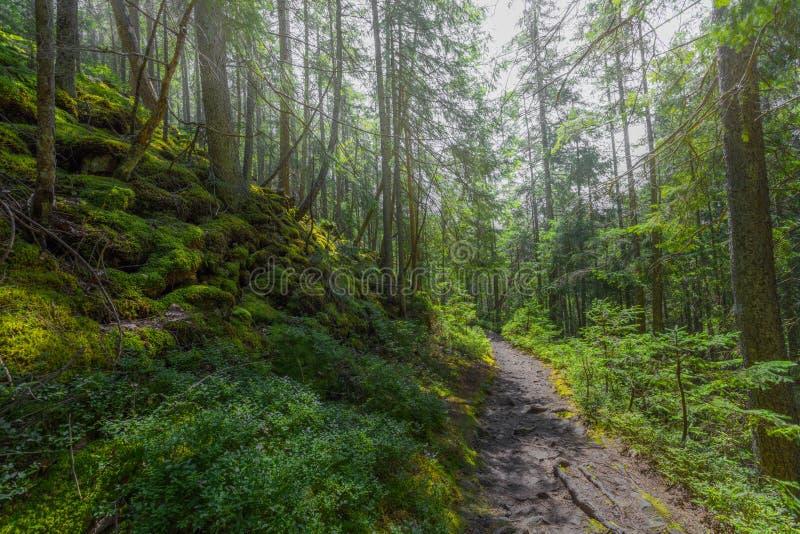 De stofweg in het bos met groene bomen op de wegkant royalty-vrije stock foto's