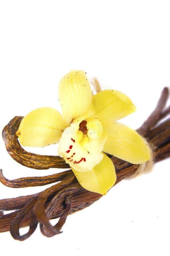 De stokken van vanilleboneschillen op wit worden geïsoleerd dat stock fotografie