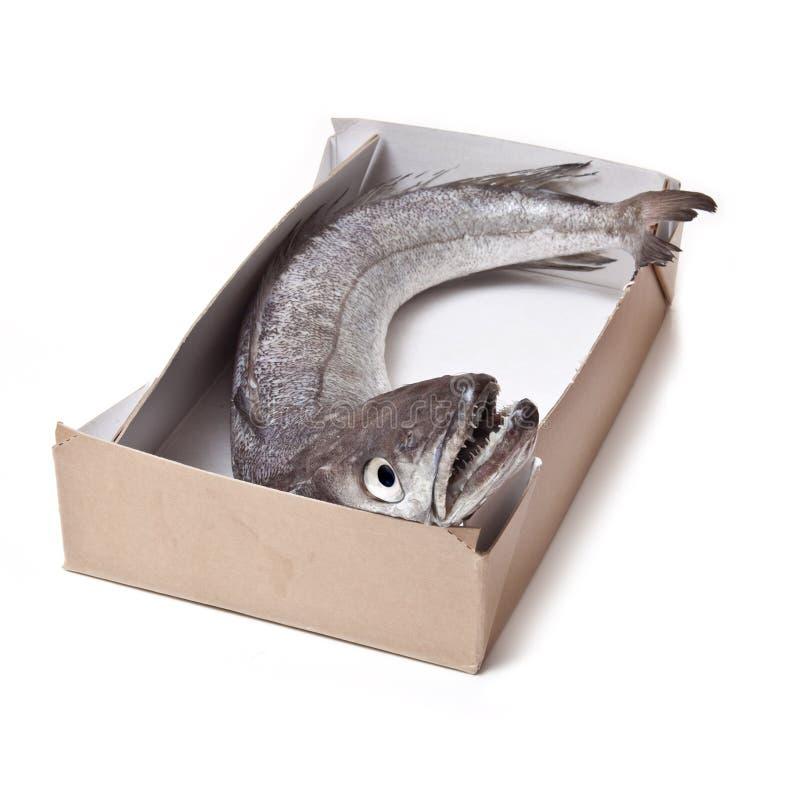 De stokvissen vissen geheel. royalty-vrije stock foto