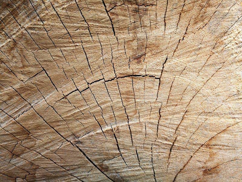 De stomp van de boom stock fotografie