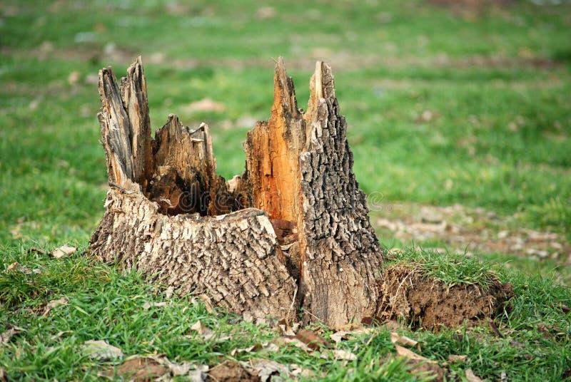 De stomp van de boom stock foto's