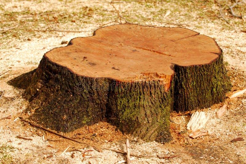 De stomp van de boom stock afbeeldingen