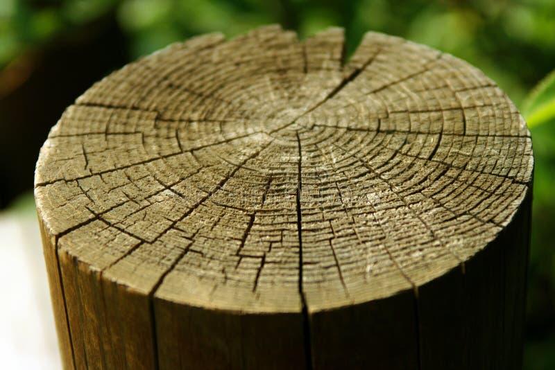 De stomp van de boom stock foto