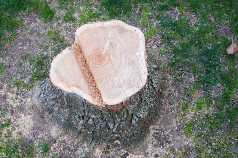 Download De stomp van de boom stock foto. Afbeelding bestaande uit naughty - 54081680
