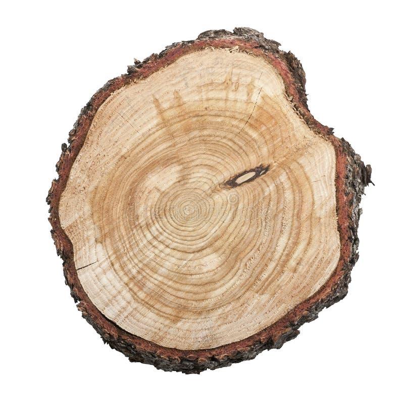 De stomp van de boom die op witte achtergrond wordt geïsoleerdI royalty-vrije stock afbeelding