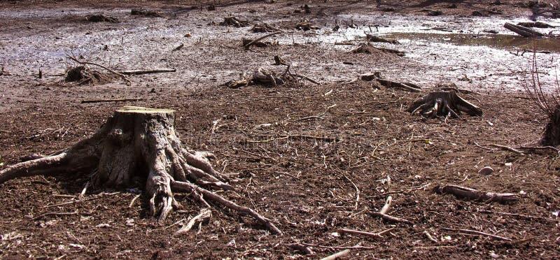 De stomp van de boom in een moeras stock afbeelding