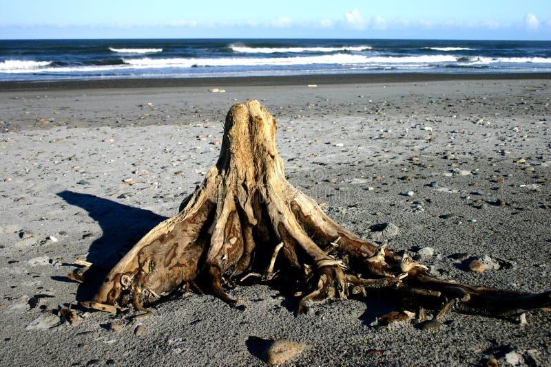 De stomp van de boom op strand royalty-vrije stock afbeeldingen