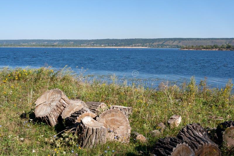 De stompen van felled populieren liggen op bank van Volga rivier op de zomerochtend royalty-vrije stock fotografie