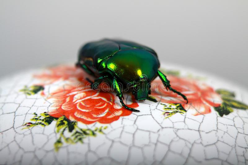 De stora blommaskalbaggarna royaltyfria foton