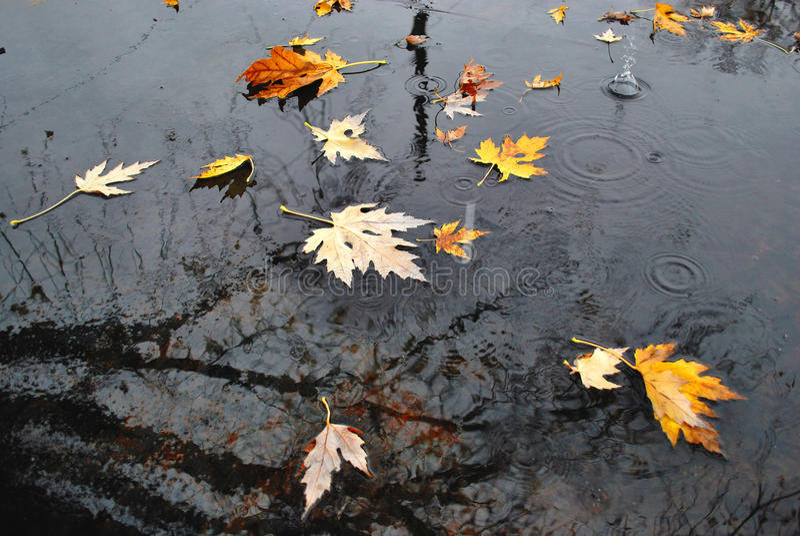 De stortbui van de herfst stock afbeelding