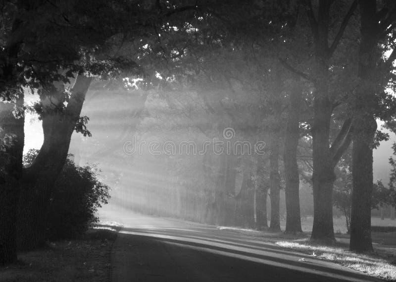 De straal van de zon stock afbeelding