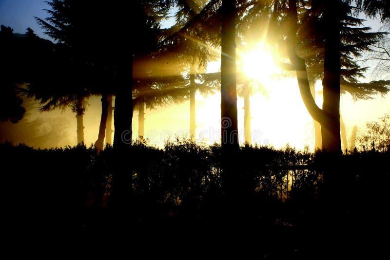 De straal van de zon in een mistige dag stock fotografie