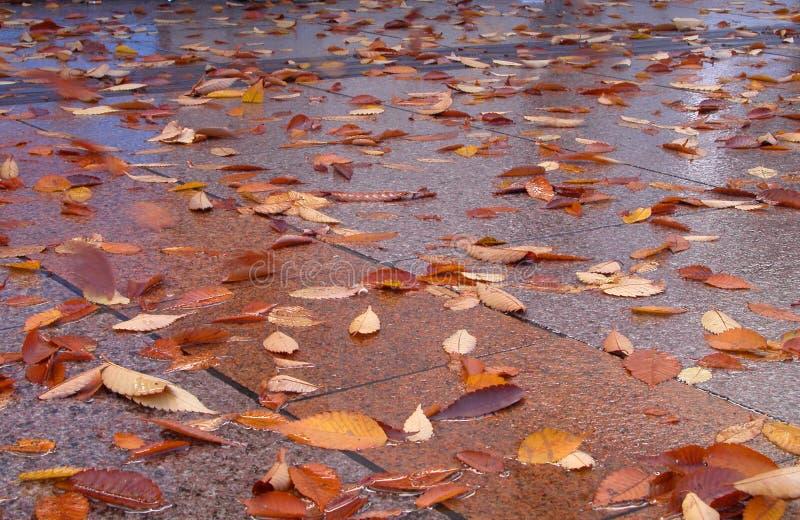 De straat van de herfst stock afbeeldingen