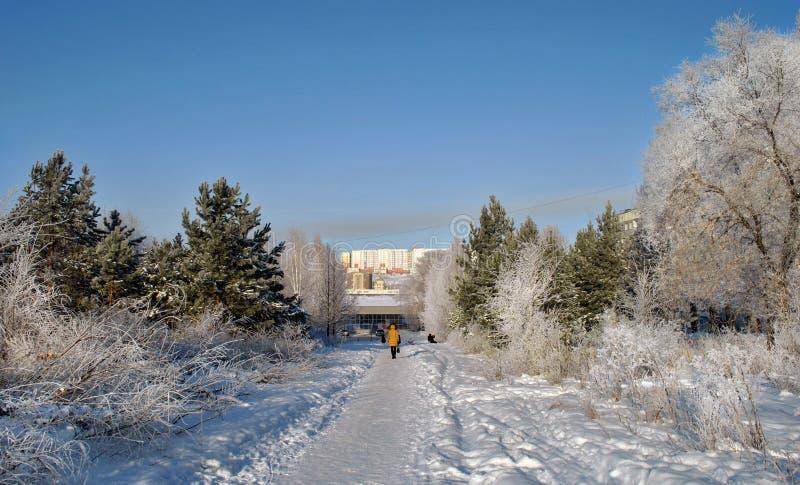 De straat van de stad in de winter, sneeuwbomen en een vrouw loopt langs de sneeuwweg stock afbeeldingen
