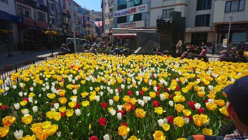 De straatyalova Turkije van Tolepbloemen stock foto