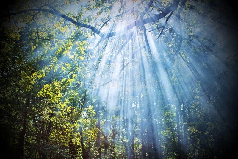 De stralen die van de zon door bomen glanzen royalty-vrije stock foto