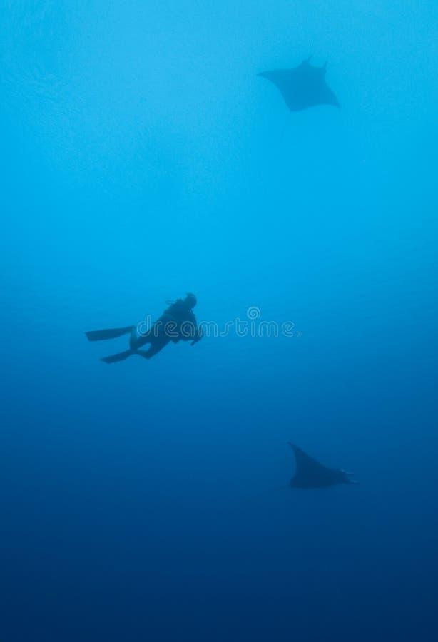 De Stralen en de Scuba-duiker van Manta stock foto's
