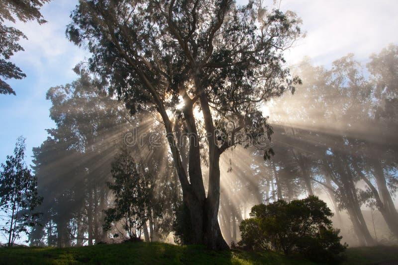 De stralen van de boom en van de zon royalty-vrije stock fotografie