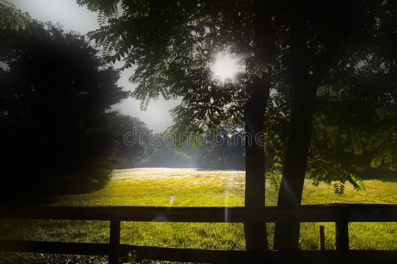 De stralen van de ochtendzon royalty-vrije stock afbeeldingen