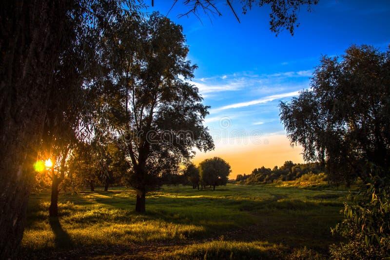 De stralen van de het plaatsen zon die door de bladeren van bomen filtreren die op de rand van het bos groeien stock foto
