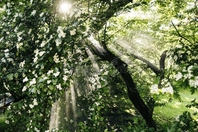 De stralen van de zon en het regenwoud royalty-vrije stock afbeelding