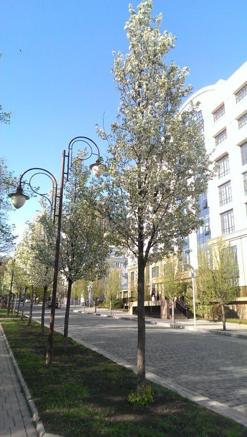 De straten van de stad stock afbeelding