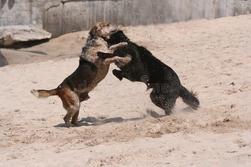 De strijd van de hond stock afbeelding