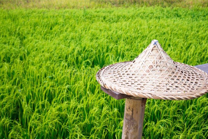 De strohoed in groene verse het milieuaard van het tarwegebied en het idee van het vakantieconcept reizen de achtergrond van Azië stock fotografie