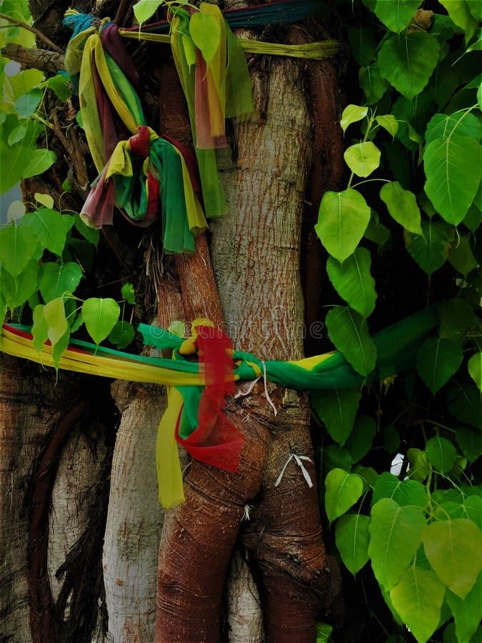 De stroken van verschillende gekleurde stoffenlinten verfraaien een bodhiboom Veelkleurige Stoffentextuur voor Bodhis-boom royalty-vrije stock afbeeldingen