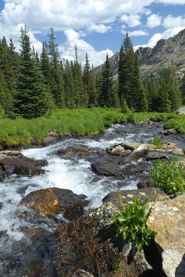 De stroom van de berg in de Rotsachtige Bergen van Colorado royalty-vrije stock foto's