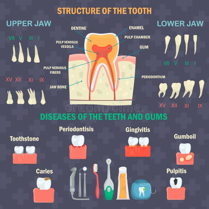 De structuur van de tand Types van menselijke tanden Tandenziekten en hygiëneproducten Tandinfgraphicsreeks stock illustratie