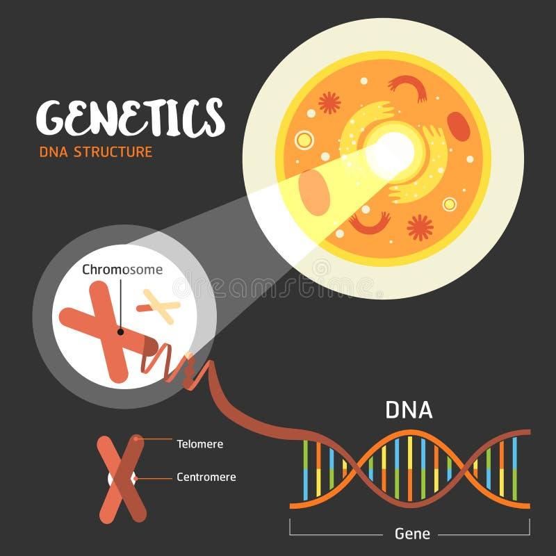 De structuur van geneticadna stock illustratie
