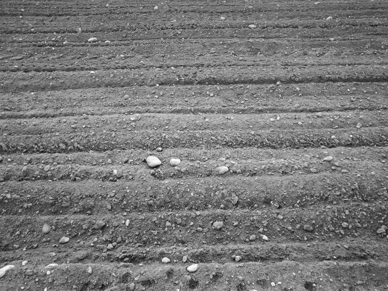 De structuur van het oogstgebied Artistiek kijk in zwart-wit stock afbeelding