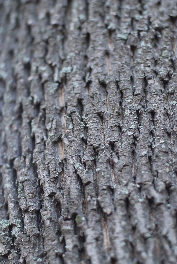De structuur van de schors van een boomboomstam royalty-vrije stock fotografie