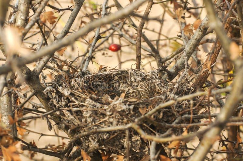 De struik van het vogelnest stock foto