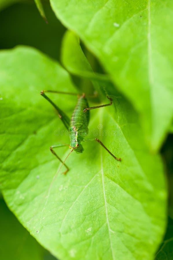 De struikveenmol van het insectportret royalty-vrije stock foto