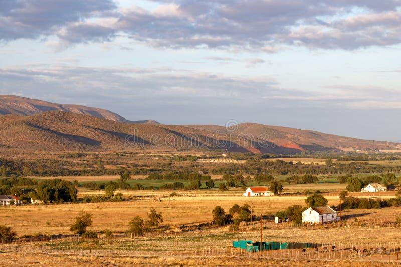De struisvogellandbouwbedrijven door de bergen stock foto's