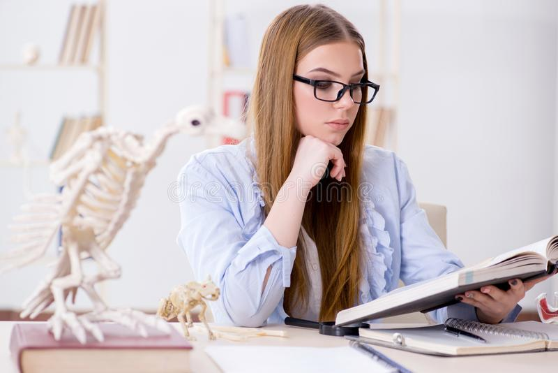 De student die dierlijk skelet in klaslokaal onderzoeken royalty-vrije stock foto's