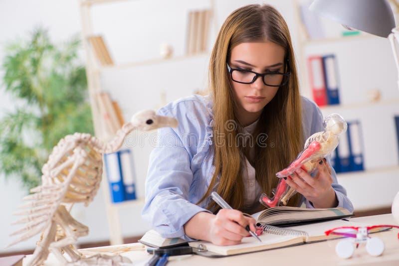 De student die dierlijk skelet in klaslokaal onderzoeken royalty-vrije stock afbeeldingen
