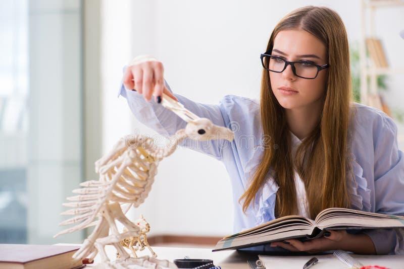 De student die dierlijk skelet in klaslokaal onderzoeken royalty-vrije stock fotografie