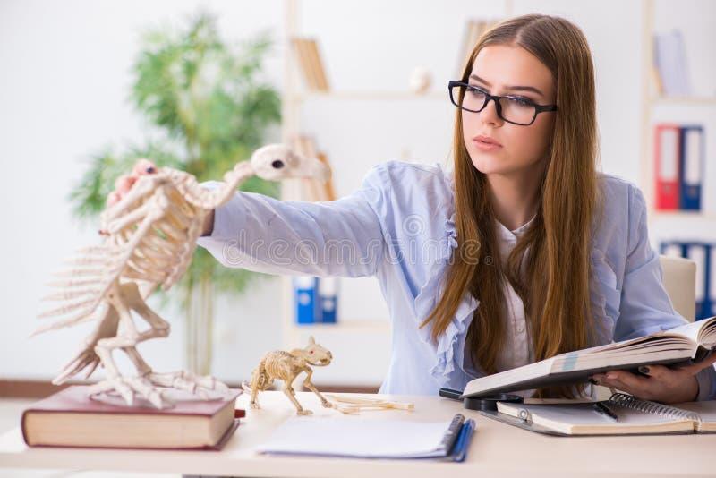 De student die dierlijk skelet in klaslokaal onderzoeken stock foto