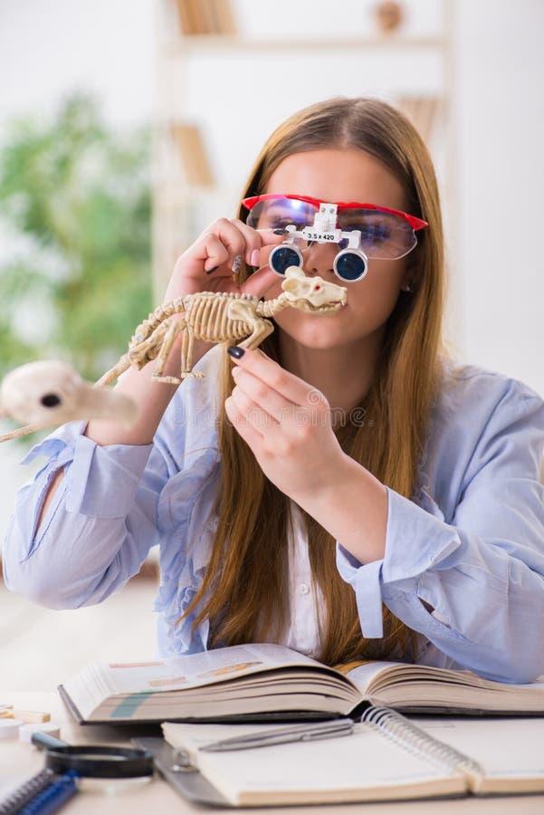 De student die dierlijk skelet in klaslokaal onderzoeken stock foto's