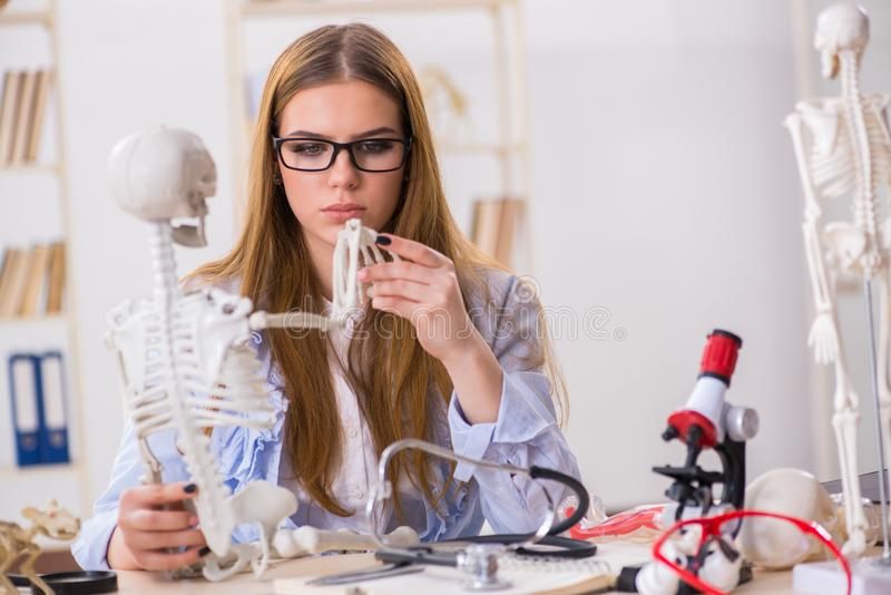 De studentenzitting in klaslokaal en het bestuderen van skelet royalty-vrije stock foto's