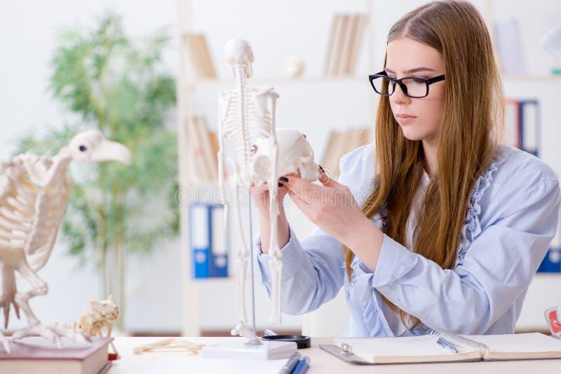 De studentenzitting in klaslokaal en het bestuderen van skelet royalty-vrije stock afbeeldingen