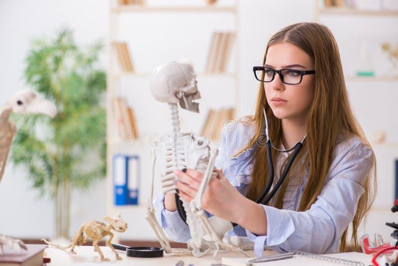 De studentenzitting in klaslokaal en het bestuderen van skelet stock afbeelding