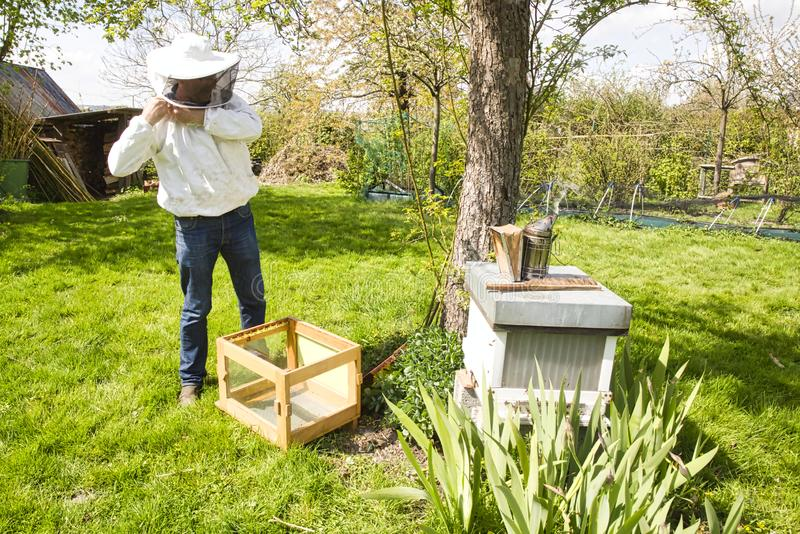 De studie van bijen is genoemd geworden melittology Deze Imker is bereid om op de bijenbijenkorf te controleren terwijl het drage royalty-vrije stock afbeelding