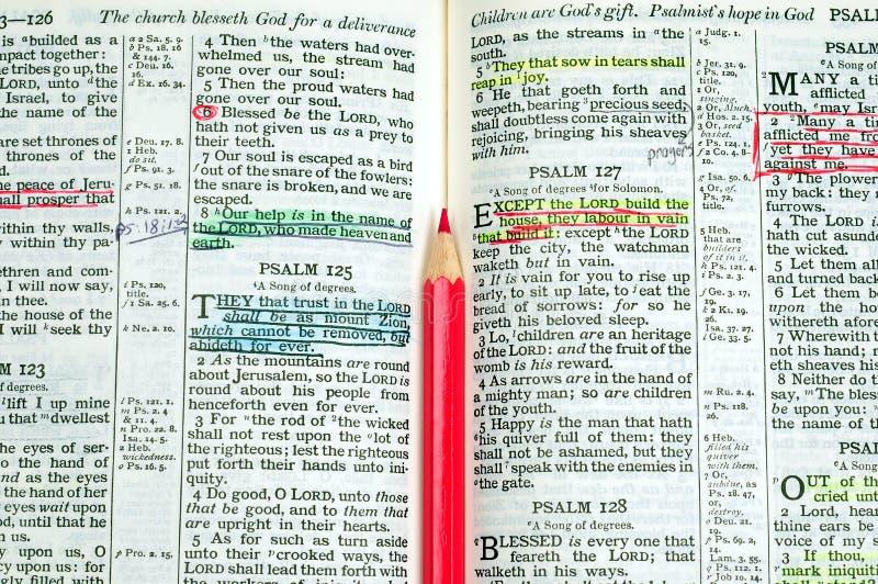 De Studie van de bijbel stock afbeeldingen