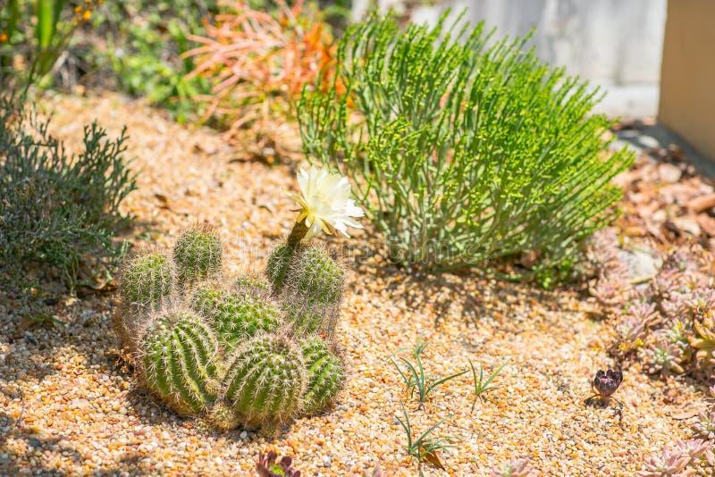 De succulente tuin van de water wijze woestijn stock afbeeldingen