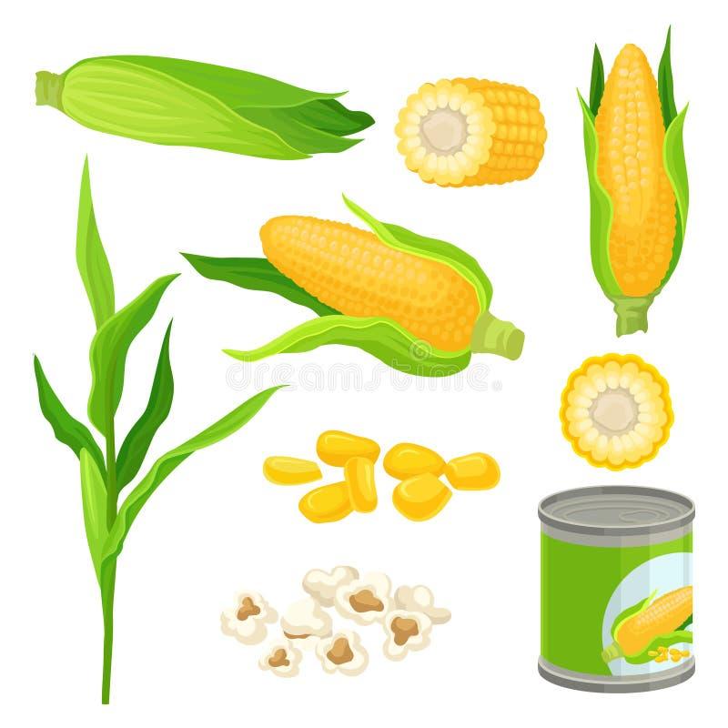De suikermaïsreeks, verse maïskolven, popcorn, blikte graan vectorillustraties op een witte achtergrond in vector illustratie