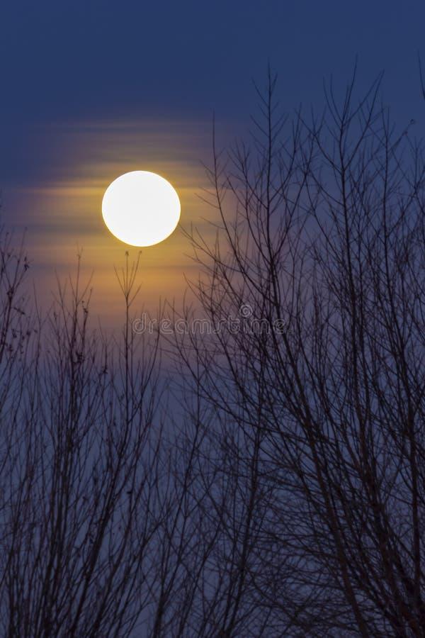 De super Maan glanst door de takken van bomen royalty-vrije stock foto